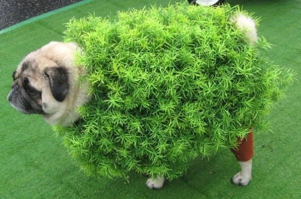Pug Costumes Chia Pet