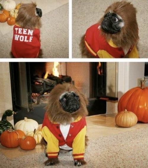 Pug Costumes Teen Wolf