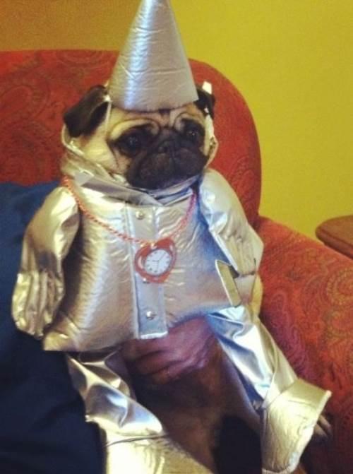 Pug Costumes Tin Man