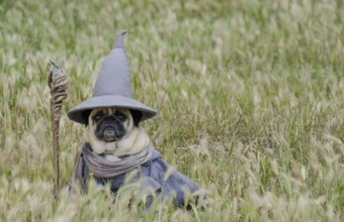 Lord Of The Rings Pug Gandalf