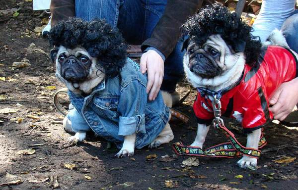 Pug Pictures Costumes