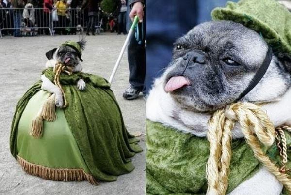 Renaissance Pug