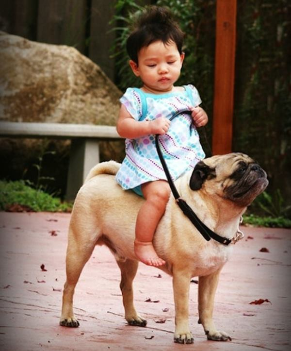 Riding A Pug