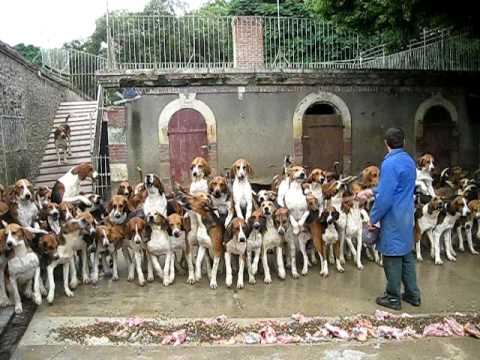 Video thumbnail for youtube video 100 Hunting Dogs Fed At Once