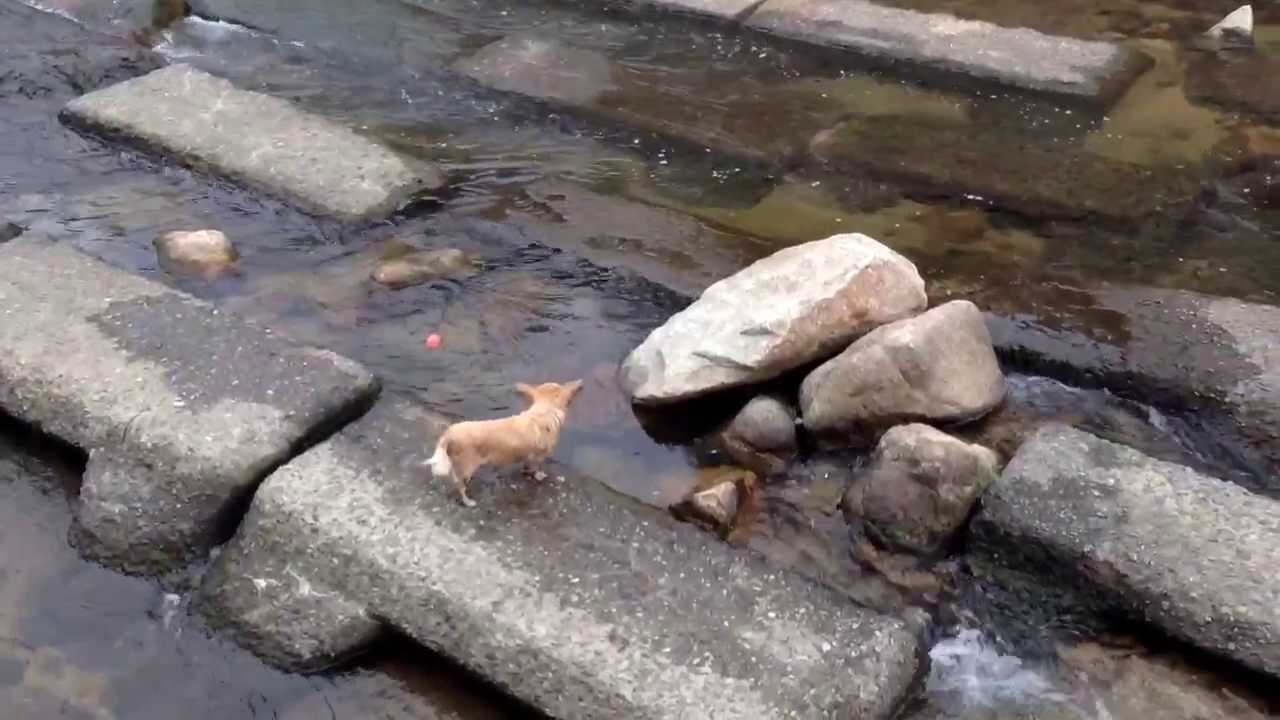 Adorable Dog Plays With Itself