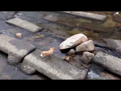 Video thumbnail for youtube video Adorable Dog Plays With Itself