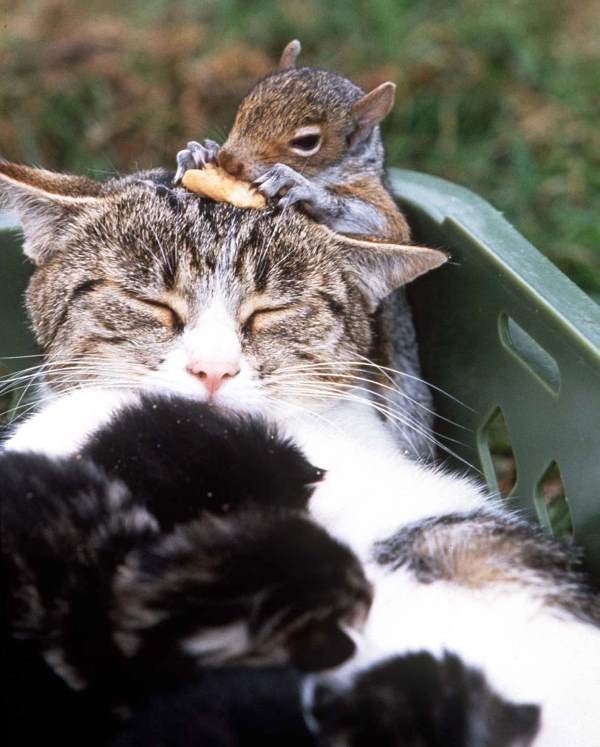 Animal Friendships Cat And Squirrel