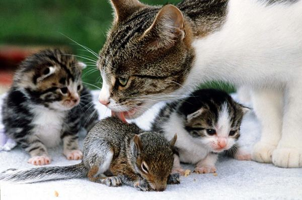 Cat And Baby Squirrel