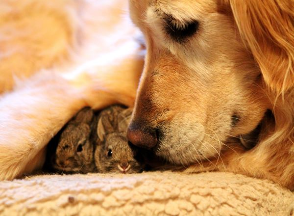 Animal Friendships Dog And Bunnies