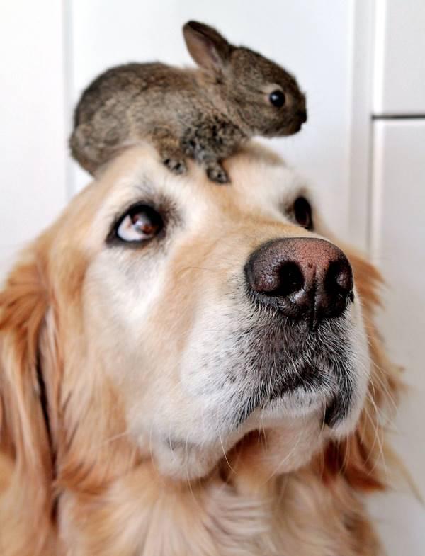 Dog And Bunnies