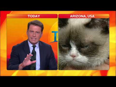 Video thumbnail for youtube video Australian Anchor Loses It On Grumpy Cat