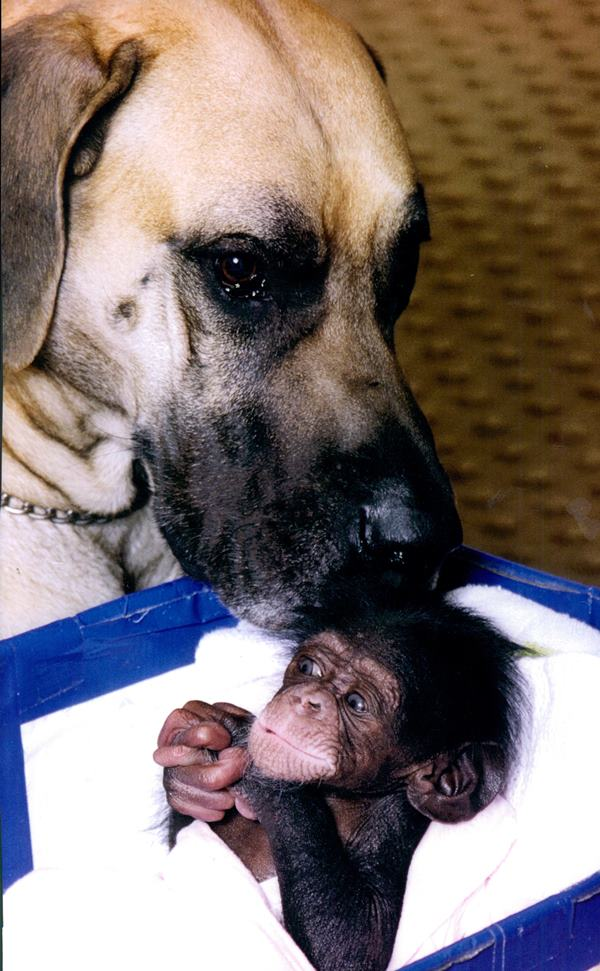 Dog And Baby Chimp