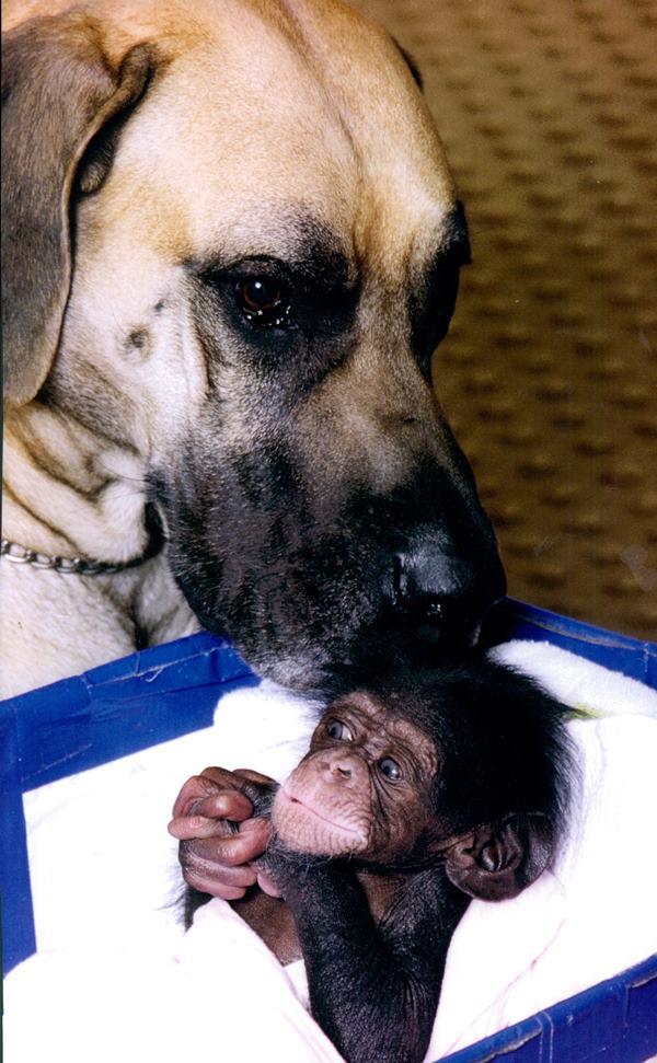 Dog And Baby Chimp