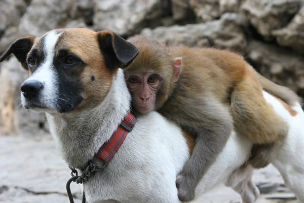 Dog And Monkey Animal Friendships