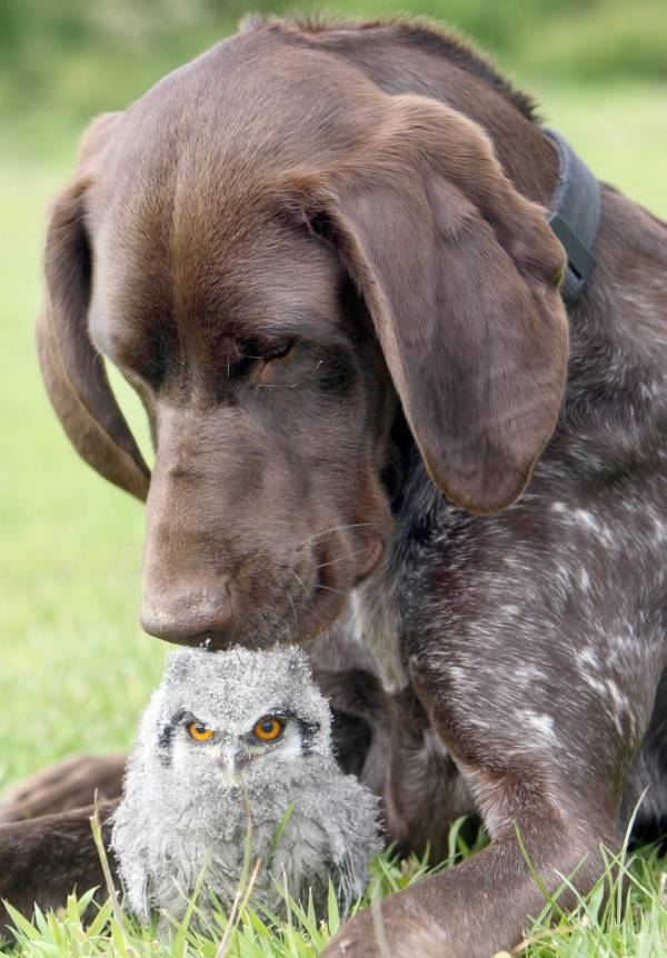 Dog And Owl Friendship