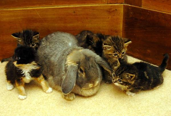 Rabbit And Kittens Photo