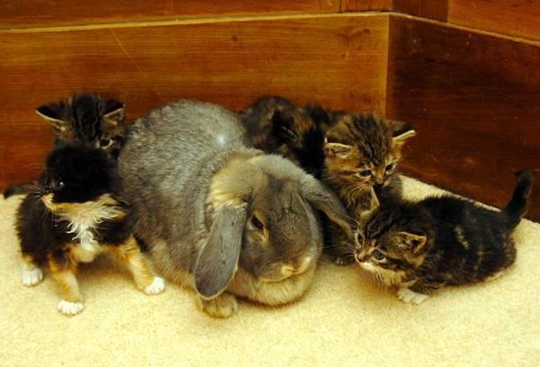 Rabbit And Kittens Photo