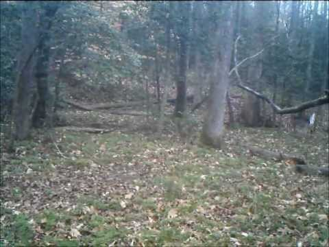 Video thumbnail for youtube video Something's Been Chasing All The Deer Away