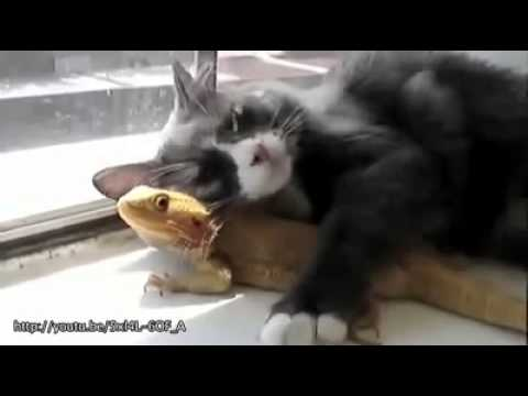Video thumbnail for youtube video The 30 Cutest Animal Friendships Ever