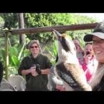 The Amazing Call Of The Kookaburra