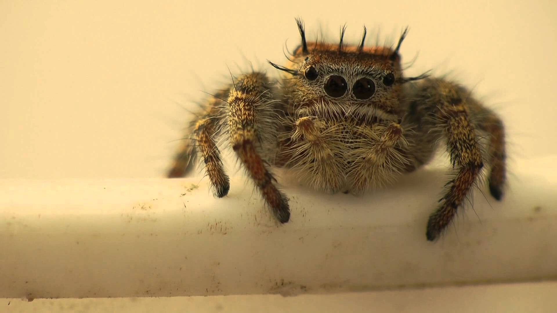 Who Knew? Cute Spiders Exist!