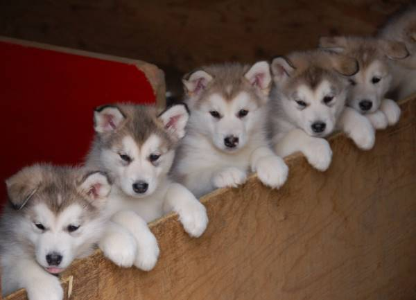 Adorable Puppy Pictures