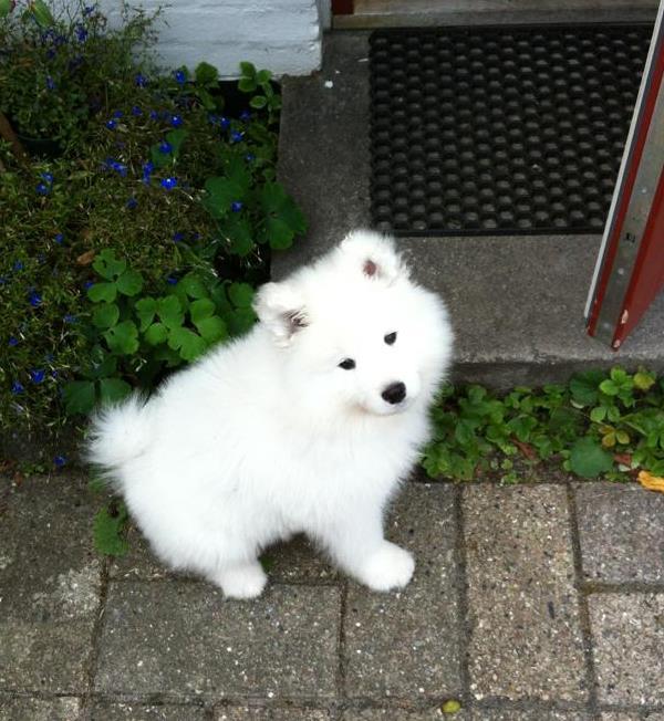 Bjelkier Puppy