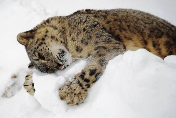 Cat Hugs The Snow