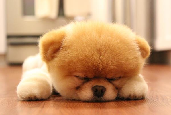 Cute Puppy Pictures Boo