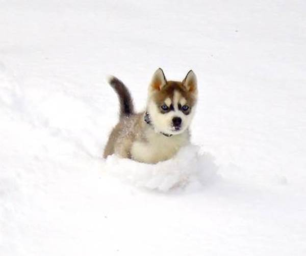 Cutest Puppy Pictures Snow