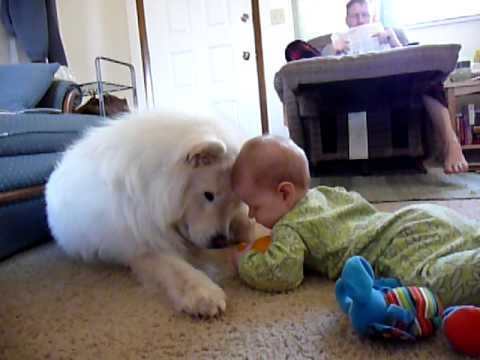 The Cutest Samoyed Photos You'll Ever See