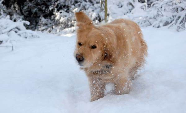 Dog Shaking Off Snow