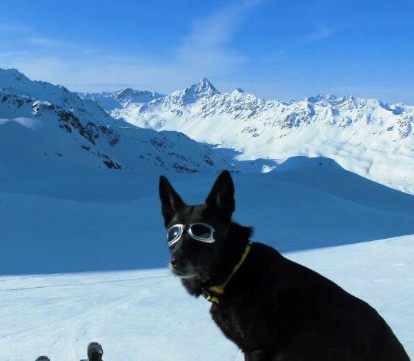 Dogs Loving Snow