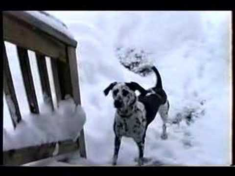 Adorable Photos Of Dogs Loving Snow