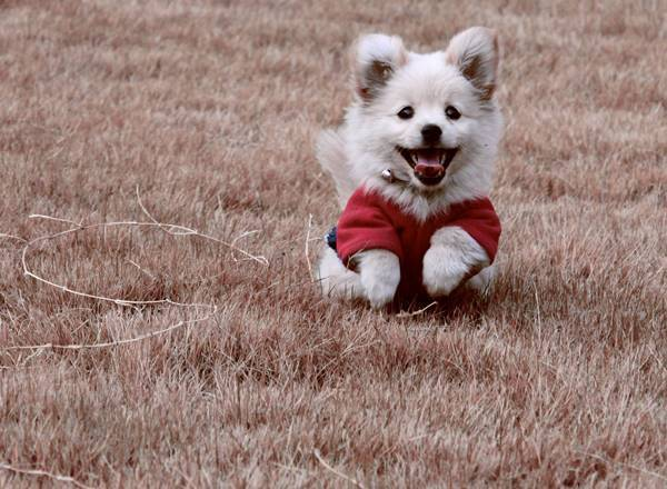 Happy White Puppy