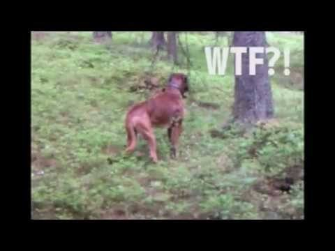 Not The Best Hunting Dog
