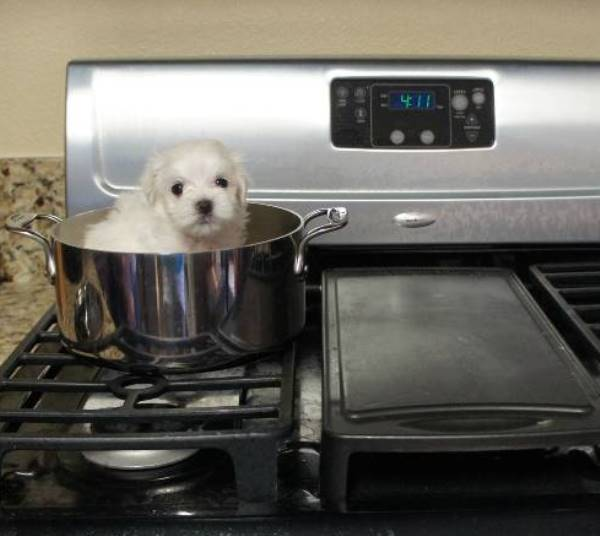 Puppy On The Stove