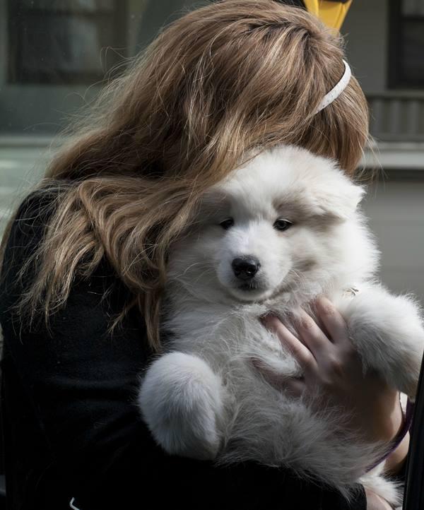 Samoyed Photos Hug