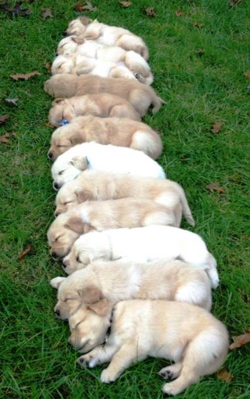 Stack Of Puppies