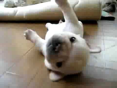 Video thumbnail for youtube video The Cutest Puppy Pictures Ever