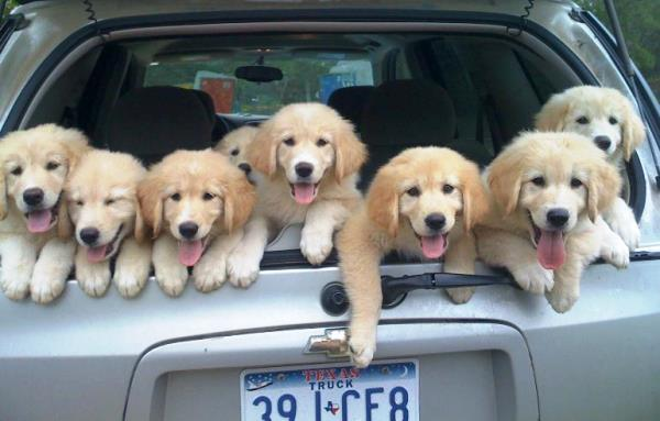 Truck Full Of Puppies