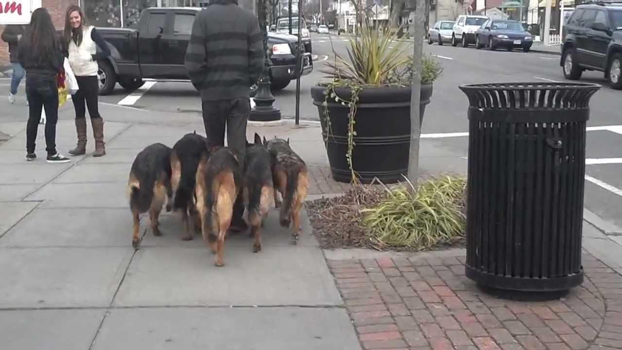 Walking Dogs Like A Boss