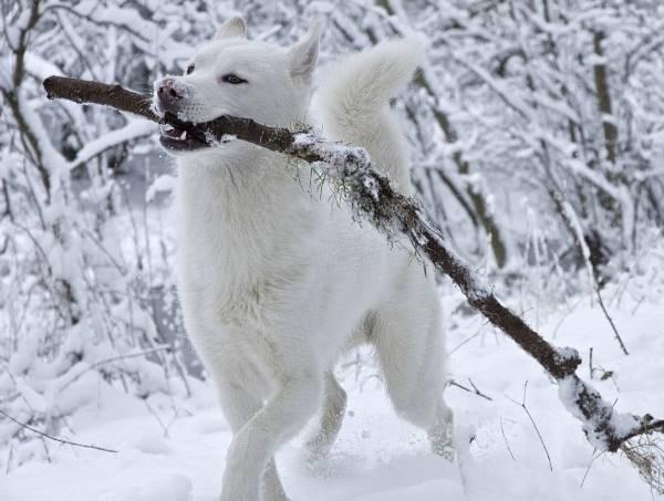 White Dog Snow