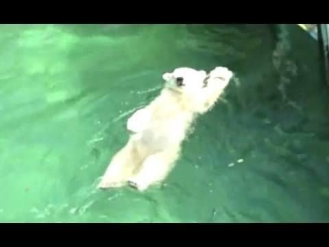 Bears Acting Like Humans