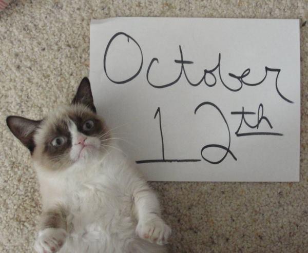 Confused Grumpy Cat