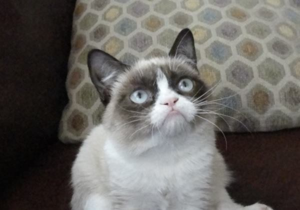 Cute Face Grumpy Cat