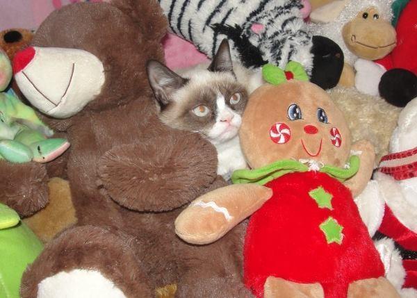 Cutest Grumpy Cat Pictures