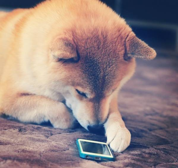 Maru With iPhone