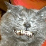 Funny Pictures Of Cats Sneezing
