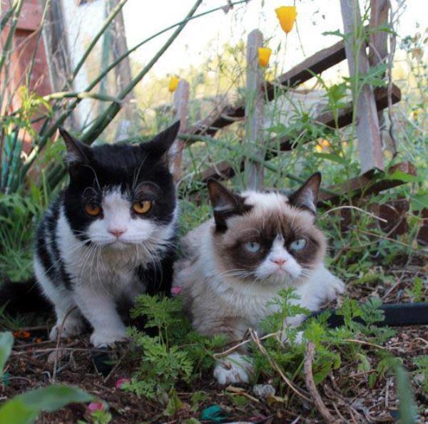 Grumpy Cat Pokey Video